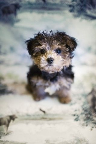 Pin By Tracy Frisbie On So Cute Cute Animals Puppies Pets