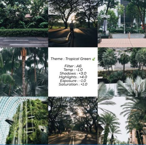 Consistency In Posting Green Brown Black And White Vsco Photography Best Vsco Filters Vsco Themes