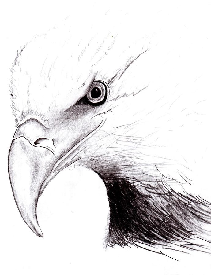 American Eagle Drawing - American Eagle Fine Art Print | Drawing ...