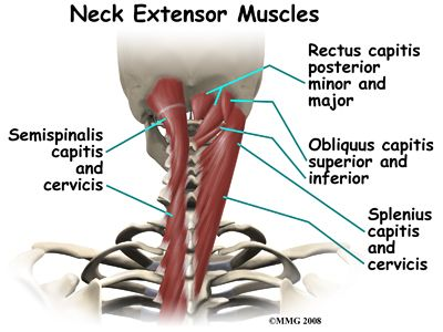 neck muscles anatomy - Google Search | Muscles | Pinterest ...