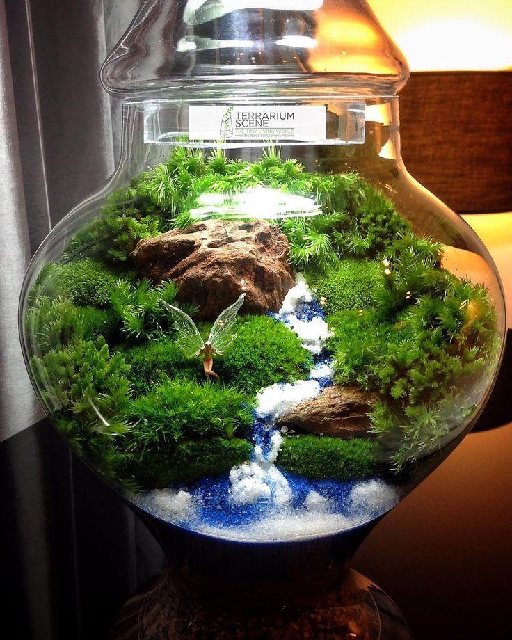 「terrarium」の画像(投稿者:SIMA WALL さん) ミニチュアガーデン