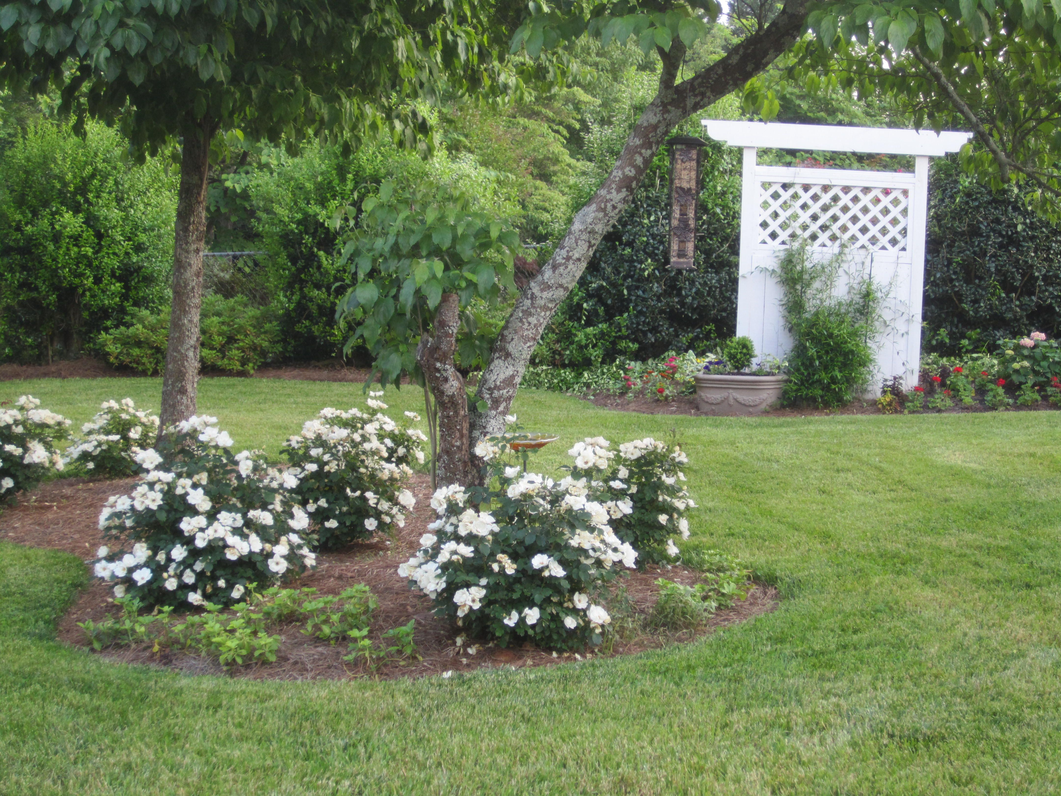 Whiteout Roses And Lattice Panel These Are The White