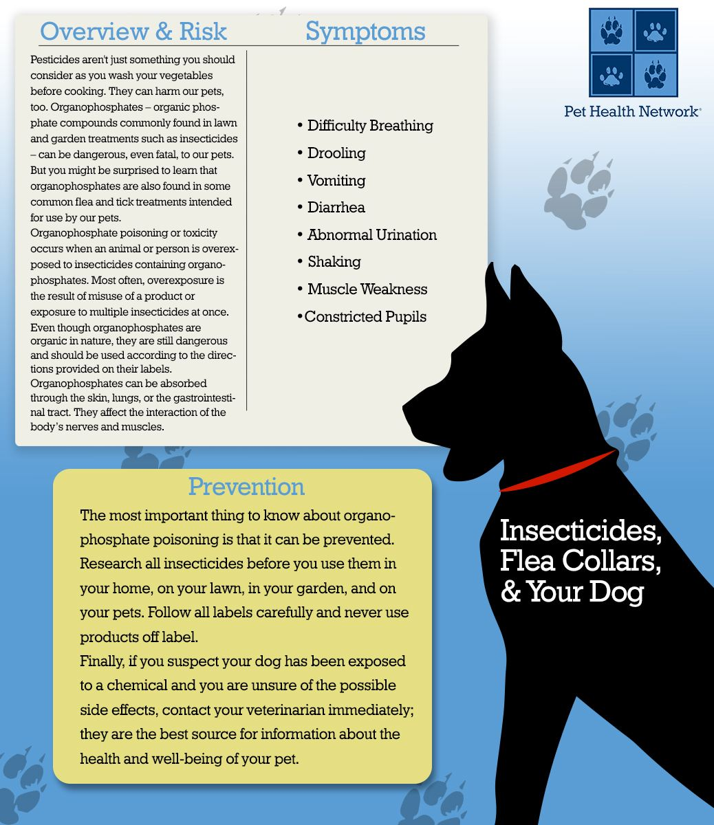 Insecticides Flea Collars And Your Dog Dog Infographic