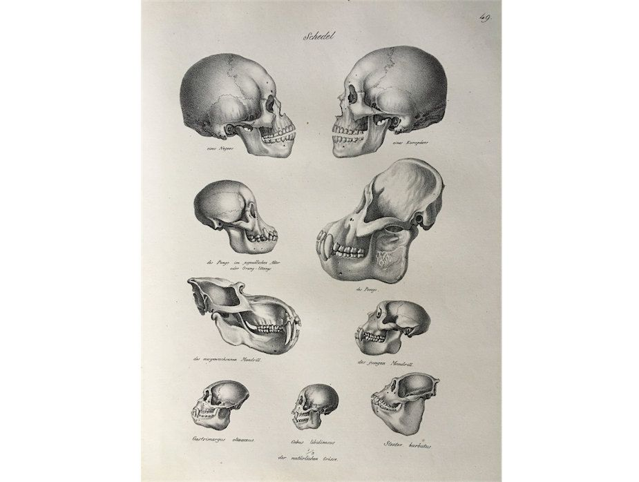 1824 ANTIQUE SKULLS LITHOGRAPH - original antique print ...