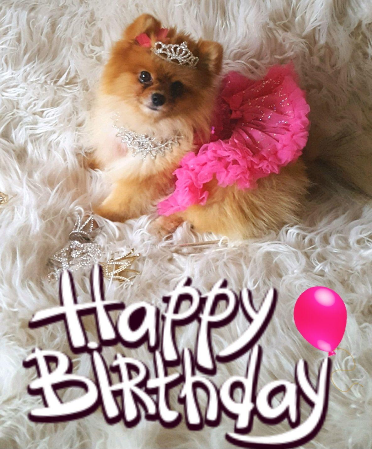 Happy Birthday Pomeranian Happy Birthday Dog Happy Birthday Images Happy Birthday