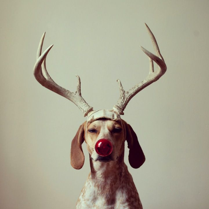 dogs also have alter egos and like to play with m a s k s...like humans :)