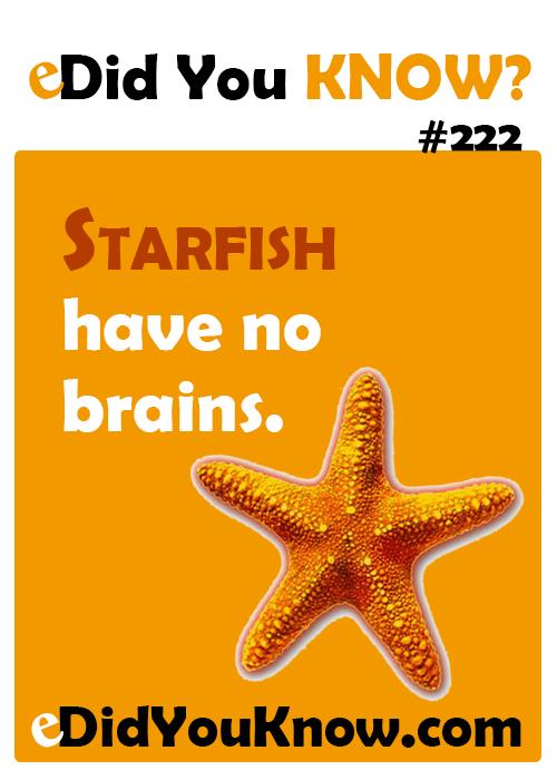 Starfish Have No Brains       Edidyouknow Com  Did