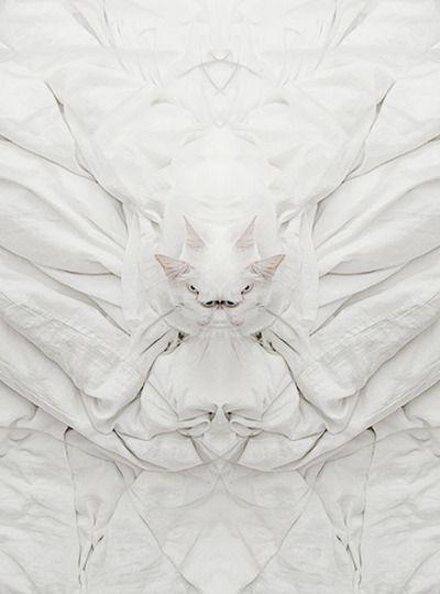 """Medici white"" cat soul"