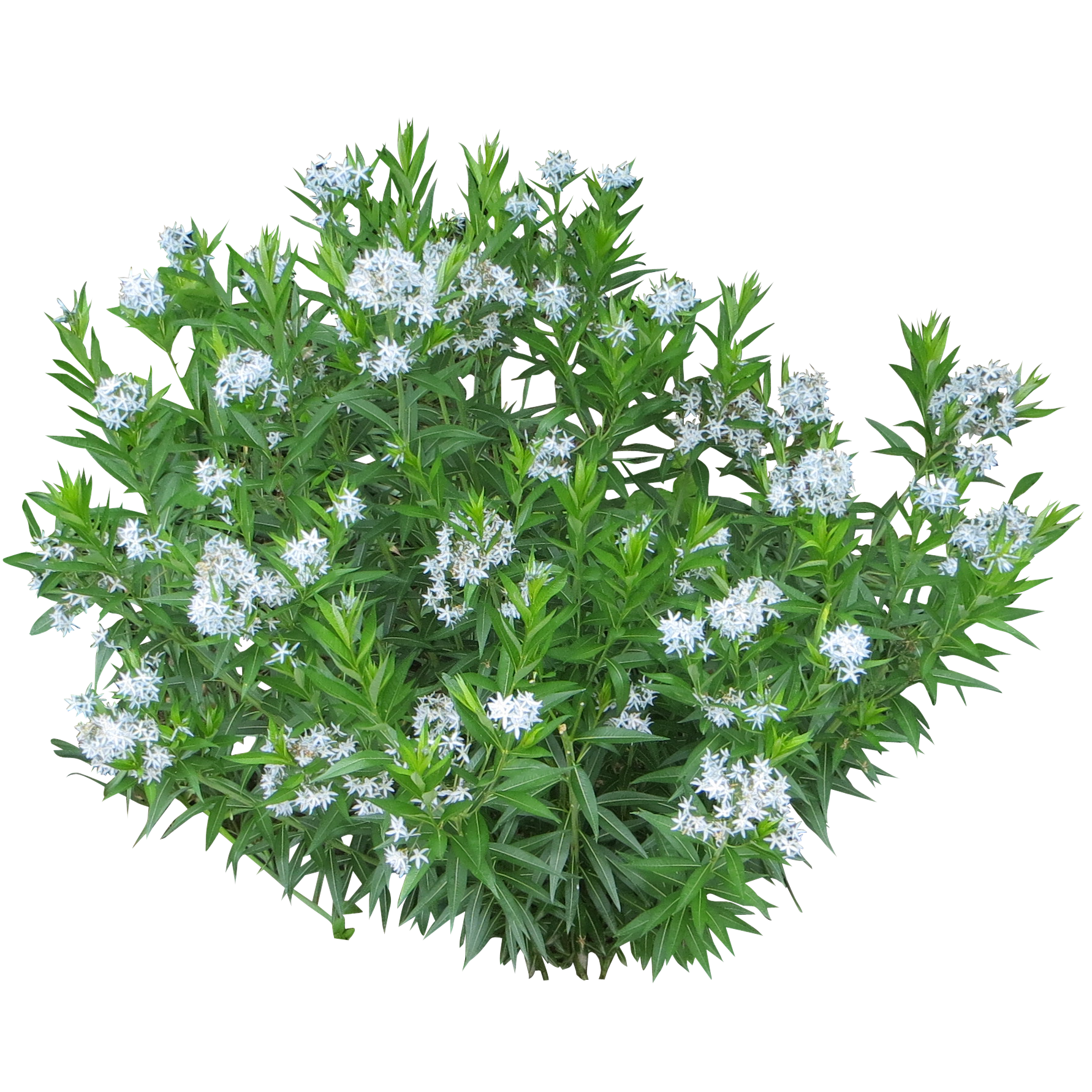 Top view plants 02 2d plant entourage for architecture - Spirea Shrub Png 1782 1782
