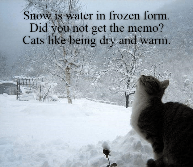 Winter Wonderland my *cough!* Snow, Funny cat memes