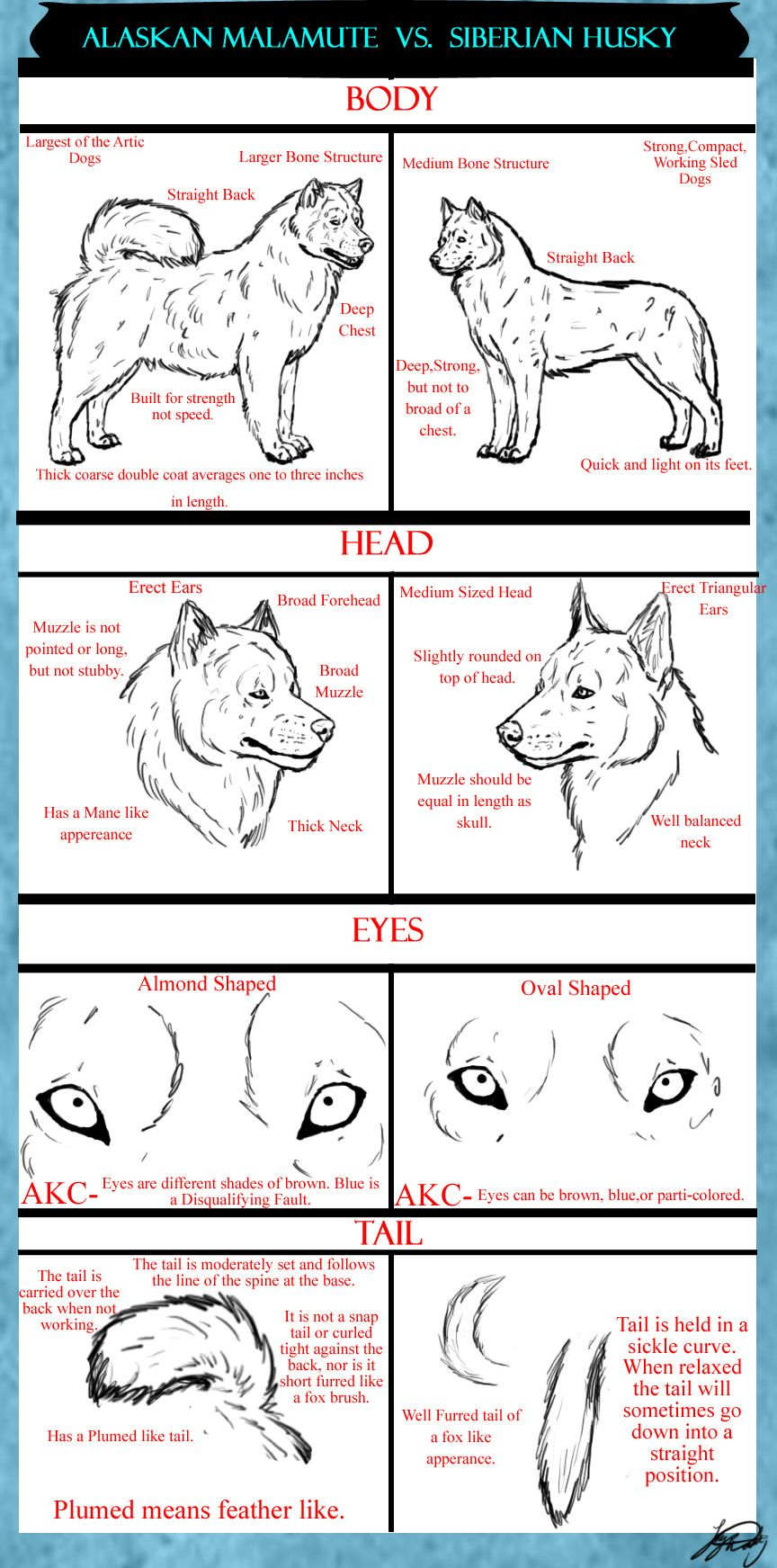 Alaskan Malamute Vs Siberian Husky Tutorital By Infernowolfen On