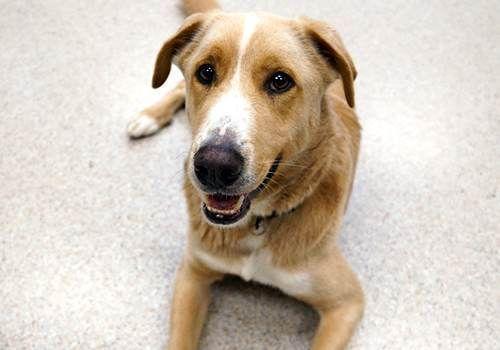 Harley Oregon Humane Society Adopt Pet Detail Adopt Me