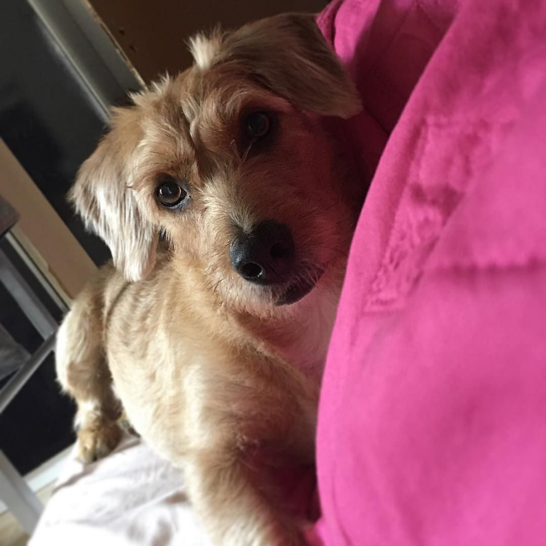 Thor  #mydog #instapet #instadog #dog #dogsofinstagram #viralata #cão #cachorro #adoteumcão #adote by paulanishino