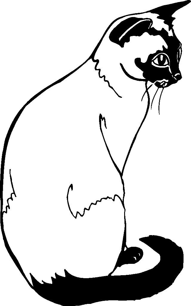 Risunki Kotov Raskraska Siamese Cats Cat Coloring Page Animal Stickers