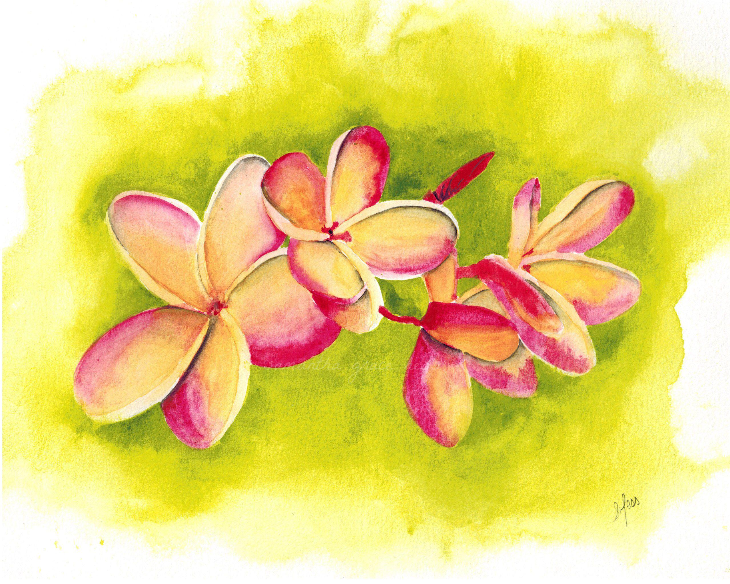 Plumeria Flower Original Watercolour Painting, Hawaiian Tropical ...