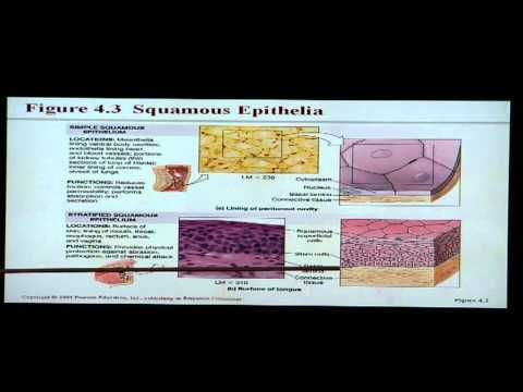 Anatomy and Physiology Help: Chapter 10 Muscle Tissue - YouTube ...