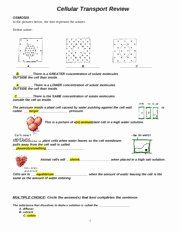 Cellular Transport Worksheet Answer Key Beautiful Cell ...