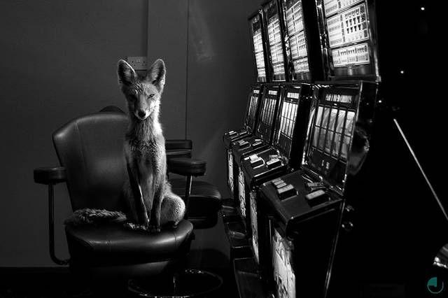 des animaux sauvages en milieu urbain par Jason McGroarty  2Tout2Rien