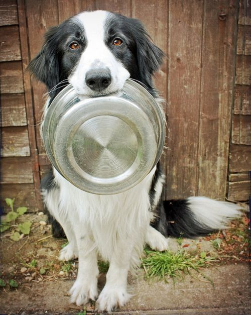 Dinner Ready Nuvetlabs Pets Cats Dogs Nuvet Dogs Best Dogs Collie Dog