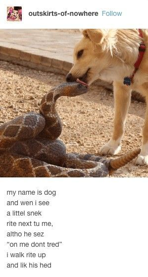 9f507835 39 Funny Animal Memes That Are Impawsible Not To Laugh At - Lovely Animals  World | Shirts I Want | Pinterest | Funny animals, Funny animal memes and  Funny