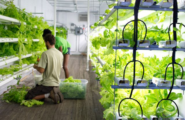 Atlanta Grows Lettuce Near Runway as Urban Farms Bloom Urban Farming is the only way to eat 100% organic while reducing our footprint! How does your garden grow? Where does your food come from?    @Pam Naugle Chastain Growers