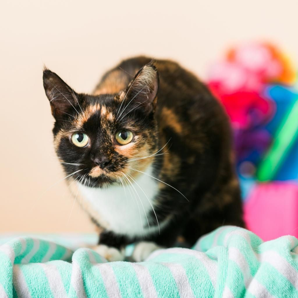 A picture of kiwi cat shelter cats animal shelter