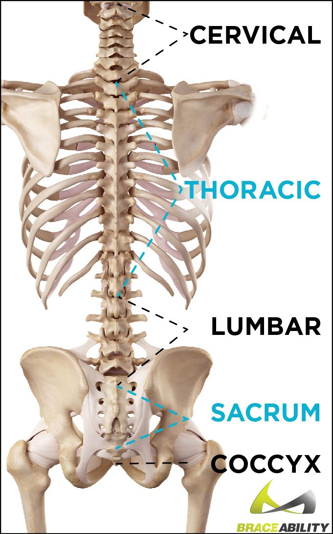 Tailbone Injury & Coccyx Pain | Pinterest | Anatomy and Natural ...