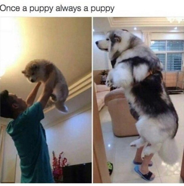 """Dirty dance me:   27 Hilarious Photos That Will Make You Shout, """"I LOVE DOGS, I LOVE THEM SO MUCH"""""""