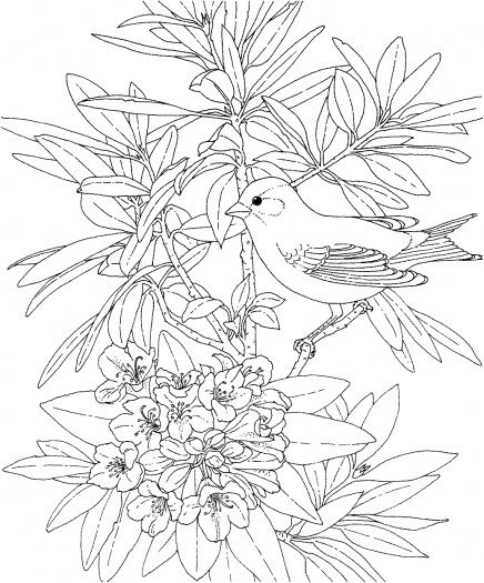 Goldfinch 6 Bird Coloring Pages Printable Flower Coloring Pages Flower Coloring Pages