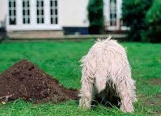 Γιατί σκάβουν οι σκύλοι; | Treading water, Dogs, Pet corner