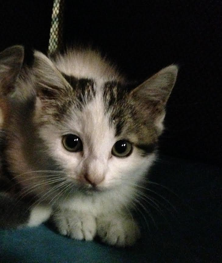 One of our volunteers found this kitten trying to survive