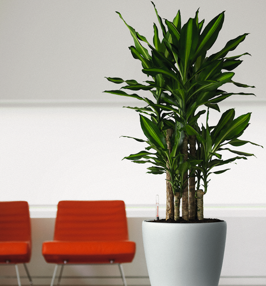 Air Purifying Houseplants Filter Toxins, Improve Indoor Air Quality