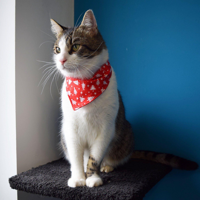 Christmas cat bandana, Holiday cat bandana, Winter pet