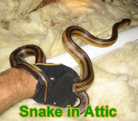 Snakes In The Attic How Do You Get Snakes Out Of The