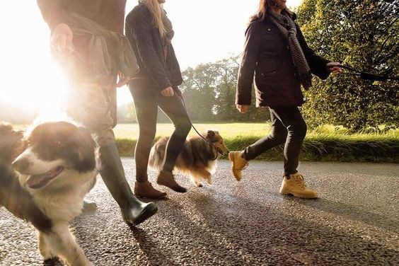 How Your Dog Can Become A Canine Good Citizen Dog Training