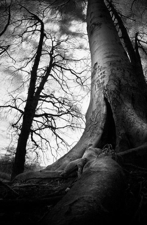This Is Amazing I Love Trees Haunted Tree Tree Drawing Landscape Photography