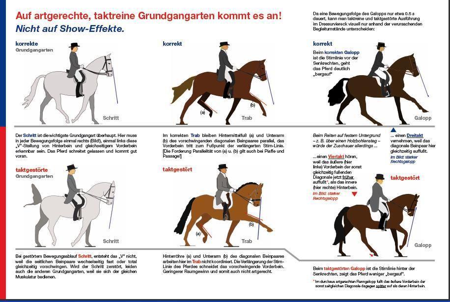 Gemütlich Das Pferd Anatomie Ideen - Menschliche Anatomie Bilder ...