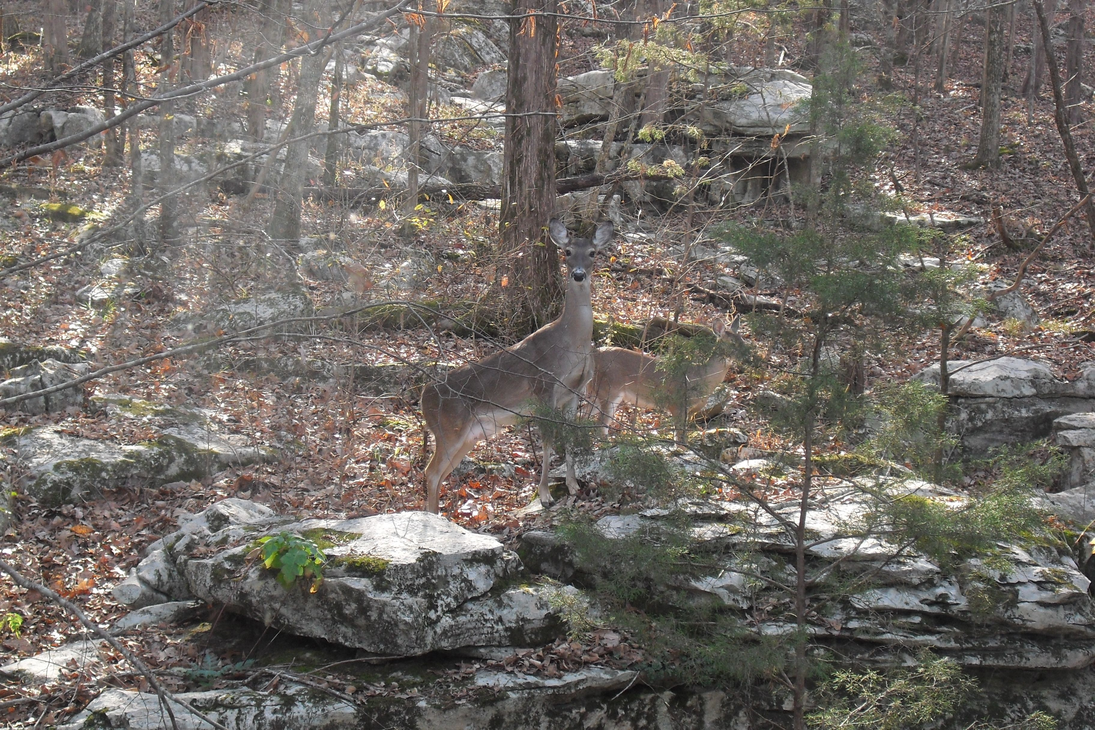 Doe and baby by kim schneider forest outdoor animals