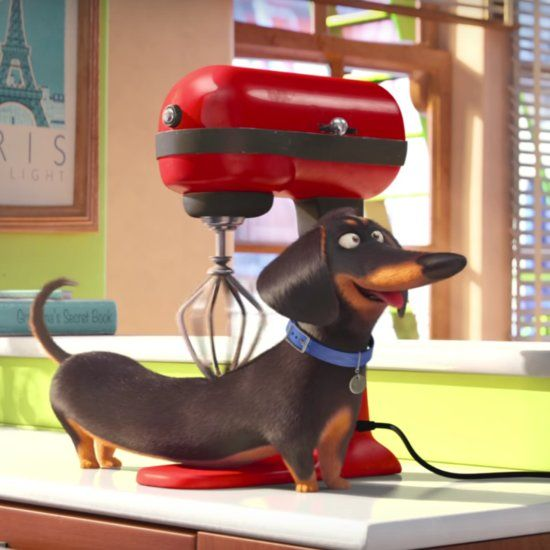 The Secret Life Of Pets With Images Pets Movie Secret Life Of Pets Secret Life