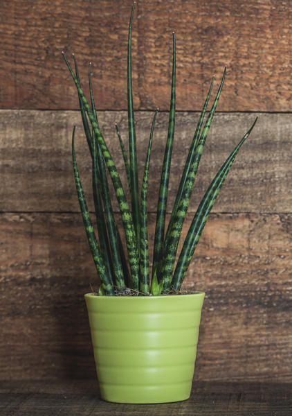 11 Zimmerpflanzen für dunkle Ecken #orchideenpflege