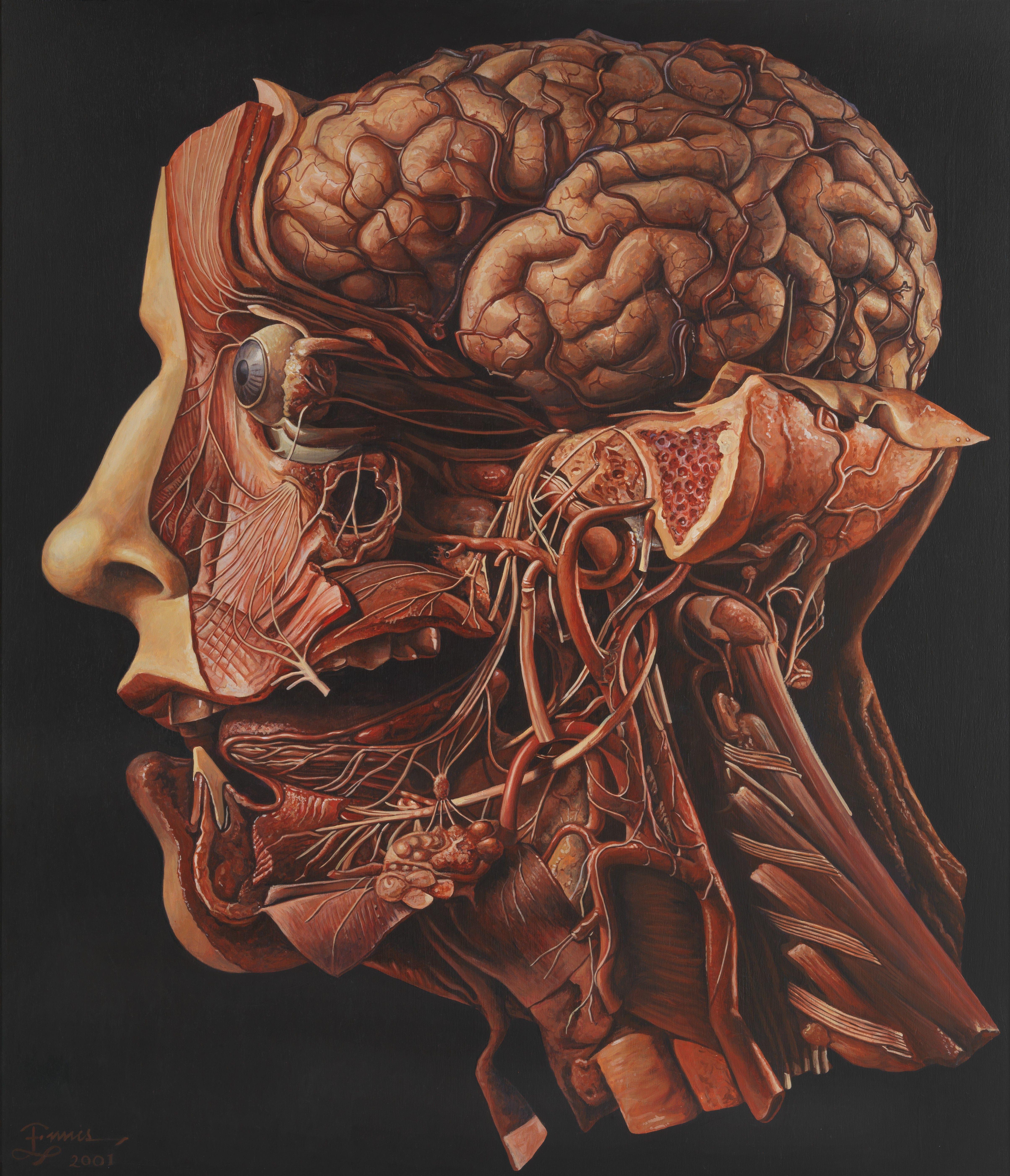 Pin by Howie Schechtman on morbid   Pinterest   Anatomy, Human body ...