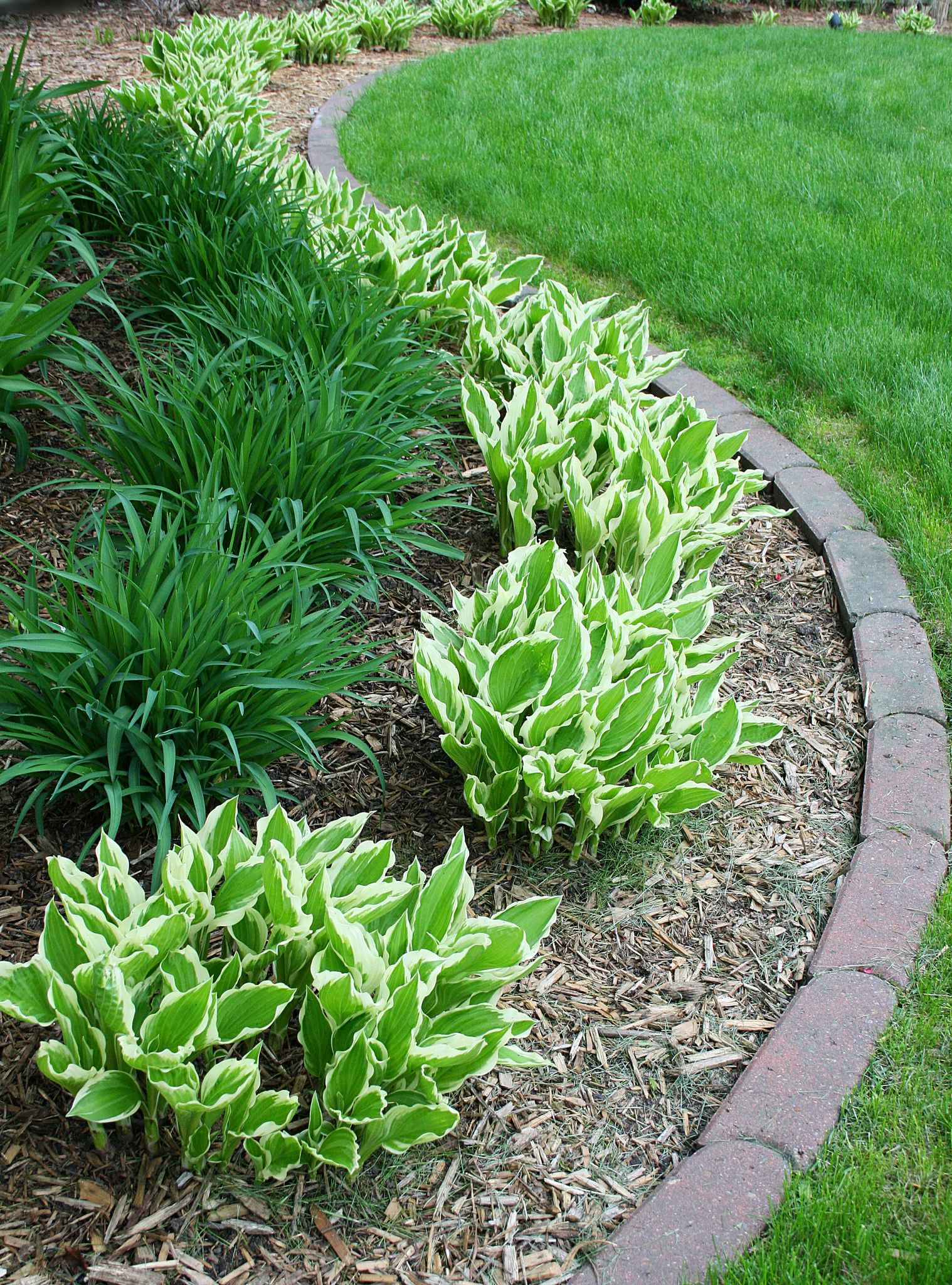 hostas & daylilies backyard landscaping