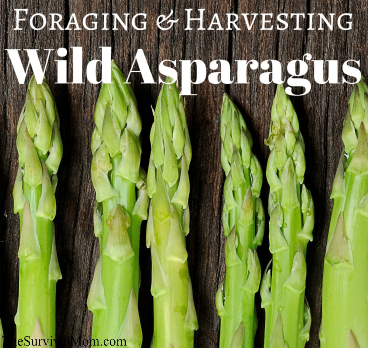Foraging And Harvesting Wild Asparagus Wild Food Foraging Asparagus Wild Foraging