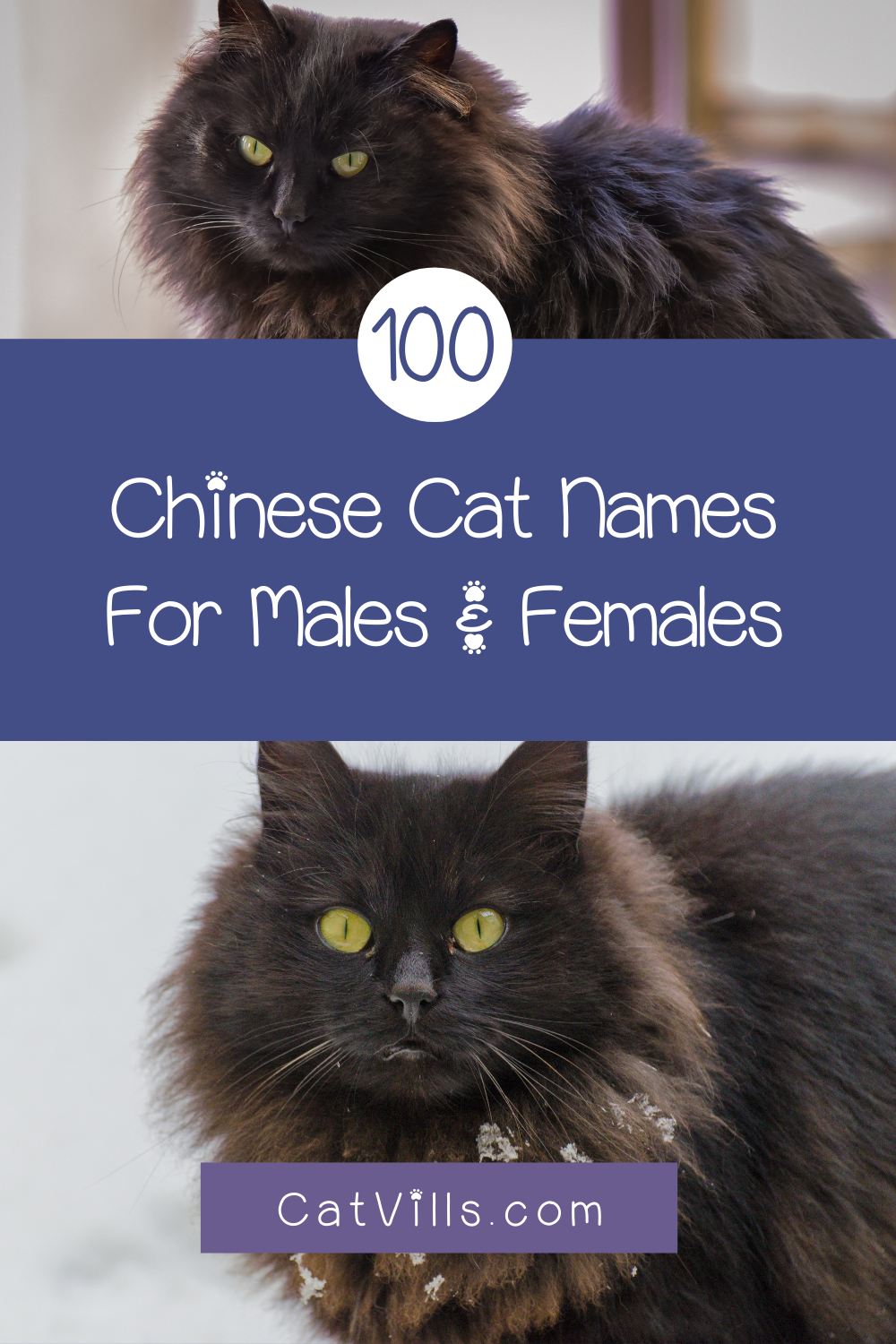 100 Exceptional Chinese Cat Names for Your New Kitten