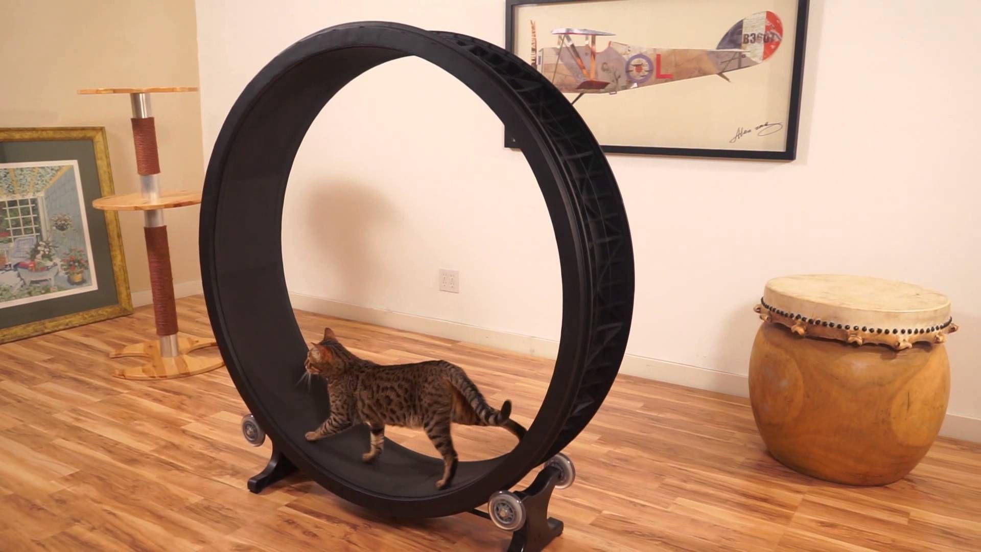 práctico y gatuno https://www.kickstarter.com/projects/620439316/one-fast-cat-exercise-wheel