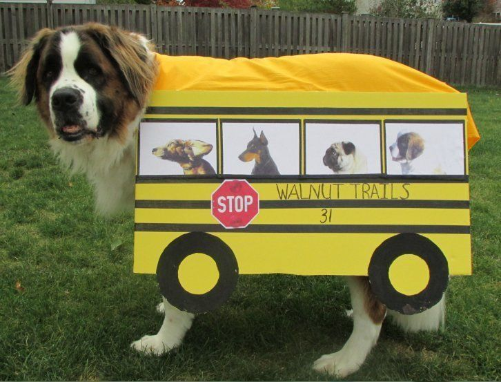 Therapy Dog School Bus Costume | Dog school, Therapy dogs ...