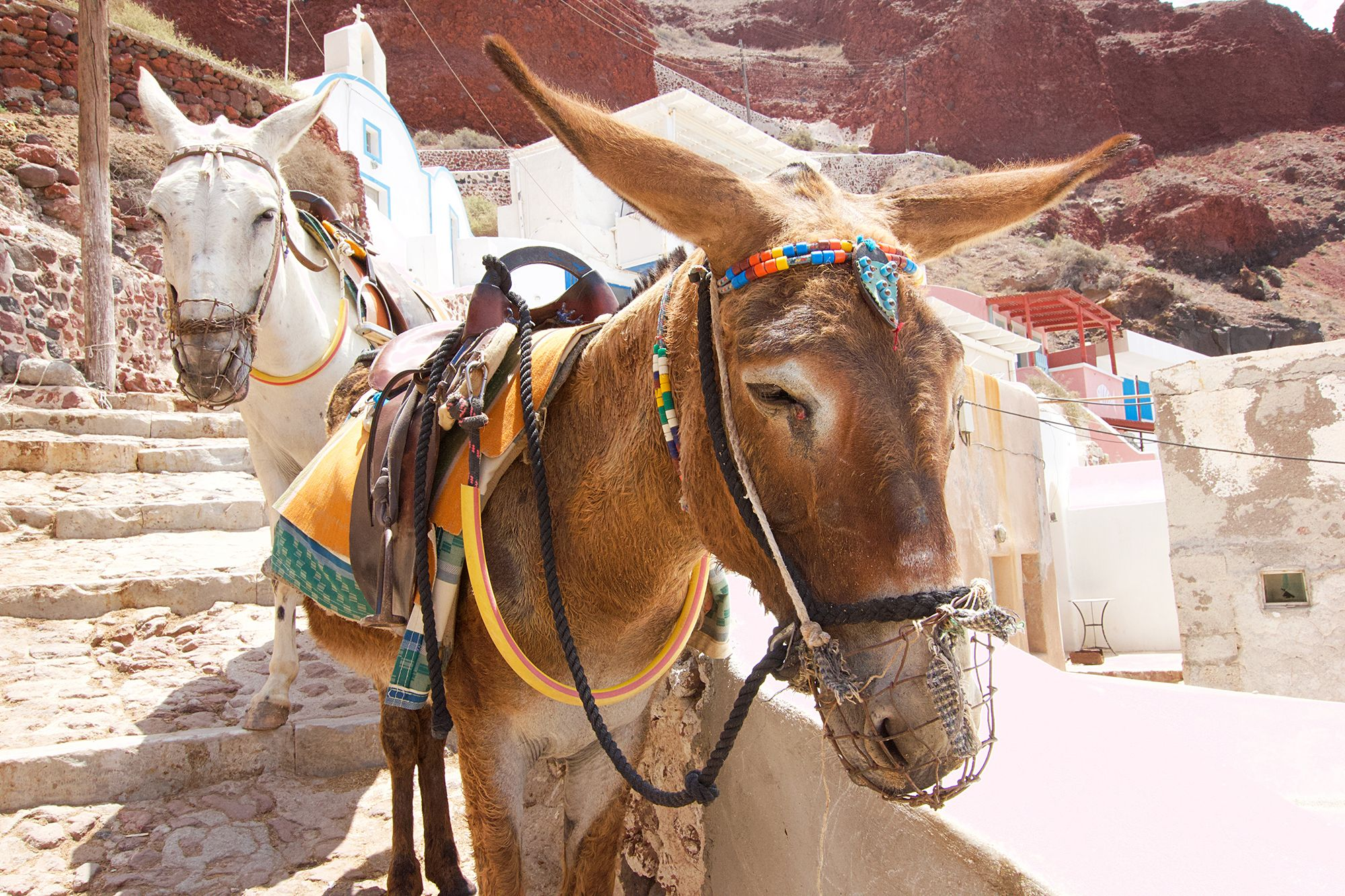 Greece Just Banned Overweight Tourists From Riding ...