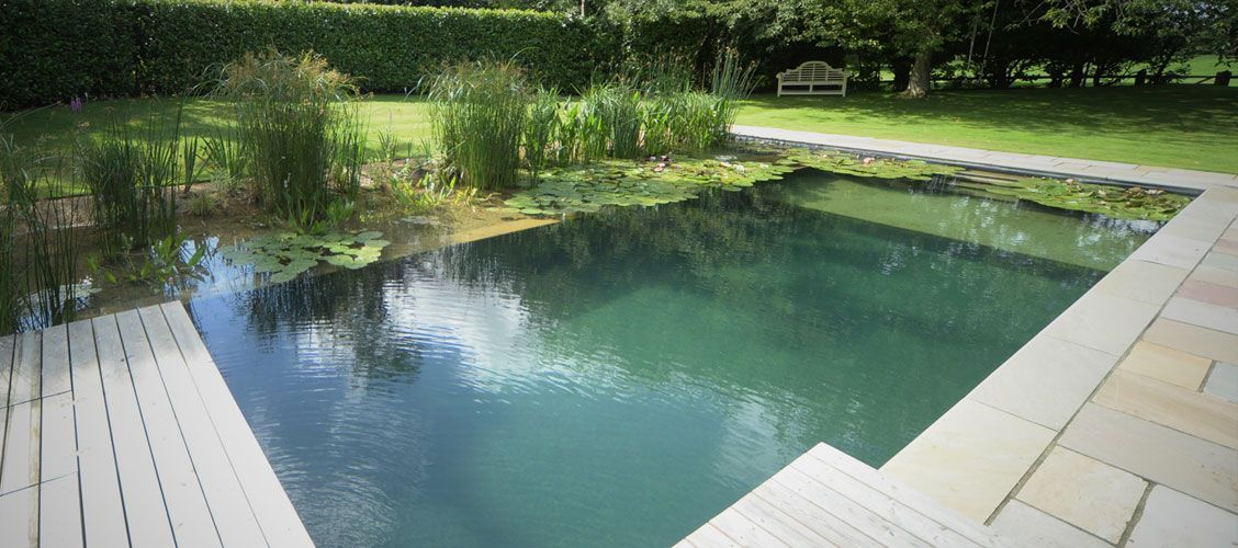 Woodhouse natural swimming pools ponds conversions for Swimming pool koi pond conversion