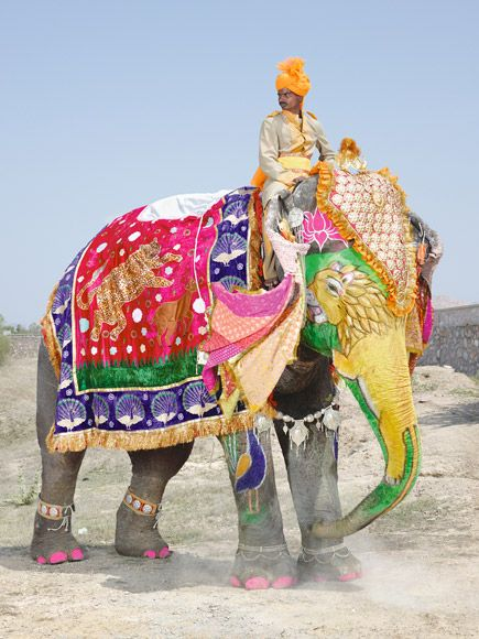 The Painted Elephants of India   The English Room   ART ...