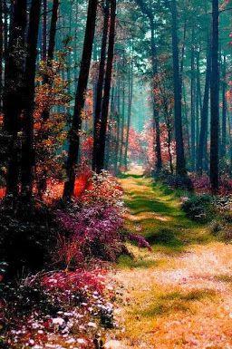 Floresta na Polônia.
